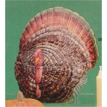 "Turkey Candy Bowl 7""t"