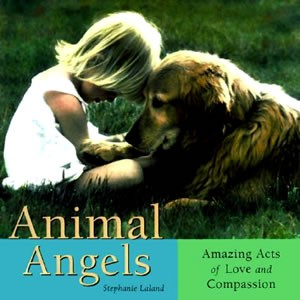 Animal Angels: Amazing Acts of Love and Compassion