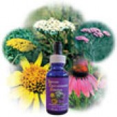 FES Quintessentials Flower Essences - Black Eyed Susan